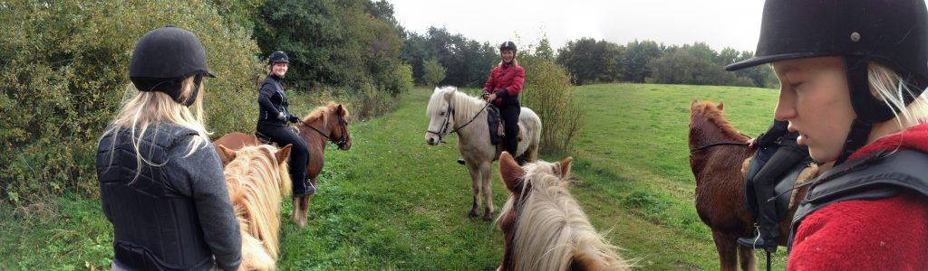 Riding camp during the autumn holidays 2013.