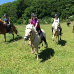 Gallop field ridelejr July 2015