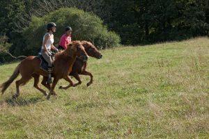Hestene strækker ud på vej op af bakkerne.