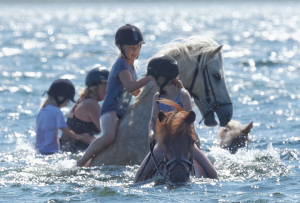 Jøkull i vandet med pigerne på en ridelejr.