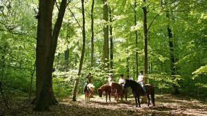 En rolig stund i den forårsgrønne skov.