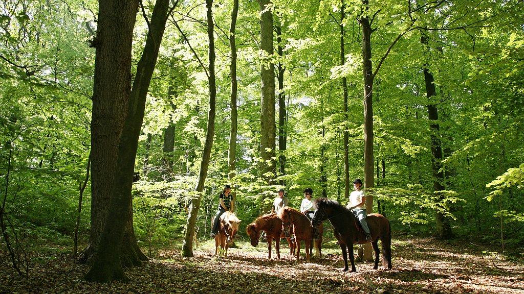 En rolig stund til hest i den forårsgrønne skov.