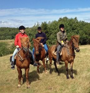 Die Pferde sind bereit und haben die Kraft fur die langen Reisen.